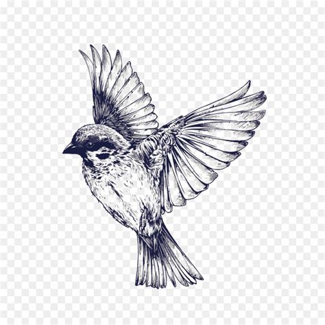 Bird In Flight Drawing at PaintingValley.com | Explore ...