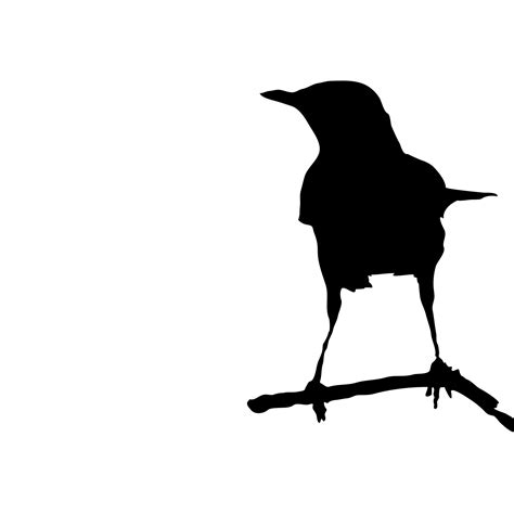 Bird On Branch Silhouette Free Stock Photo   Public Domain ...