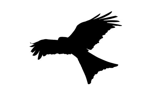Bird Silhouette Flying Free Stock Photo   Public Domain ...