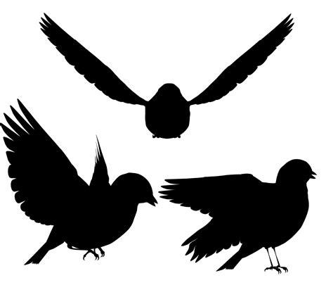 Bird Silhouette Free Stock Photo   Public Domain Pictures