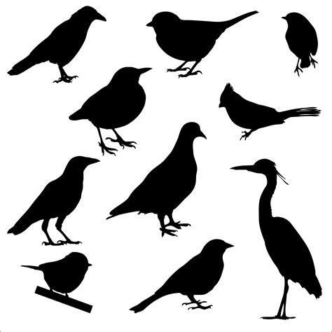 Bird Silhouettes Free Stock Photo   Public Domain Pictures