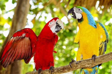 Birds are going extinct: Entire species are hanging on by ...