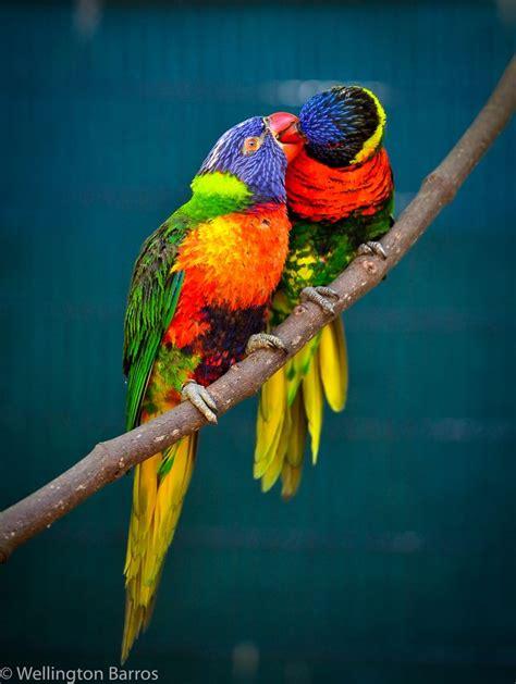 Birds / Aves / Colores / Colors   Birds, Pretty birds ...