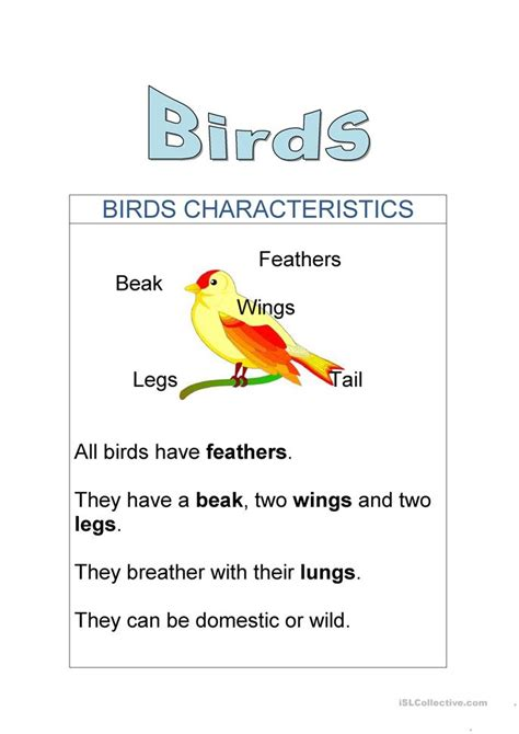 Birds Characteristics worksheet   Free ESL printable ...