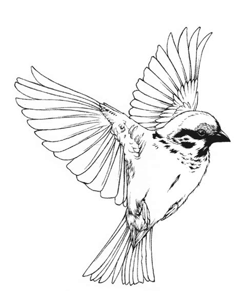 Birds Flying Drawing Tumblr at GetDrawings | Free download