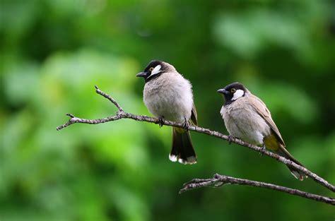 Birds Images · Pexels · Free Stock Photos
