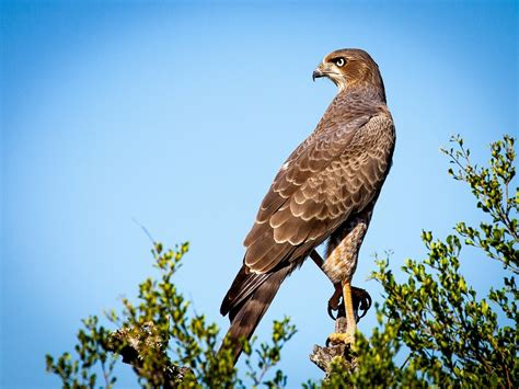 Birds of Prey coming to Lake Livingston State Park ...