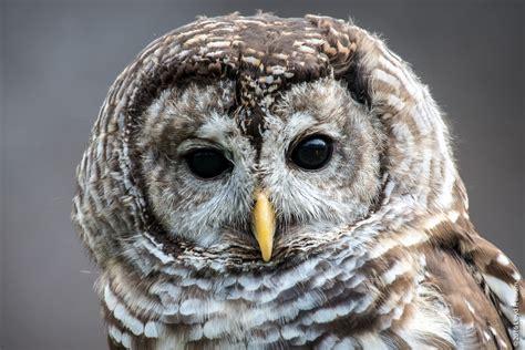 Birds of Prey – Howell  MI  Nature Center