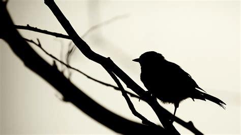 Birds Silhouette wallpaper   29441