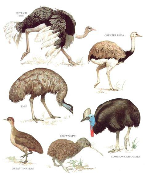 Birds Spcecies   Carteles de animales, Dibujos de animales ...
