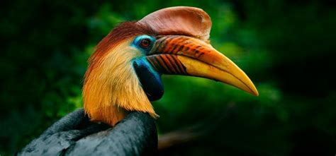 Birds, their different beaks and the functions they perform