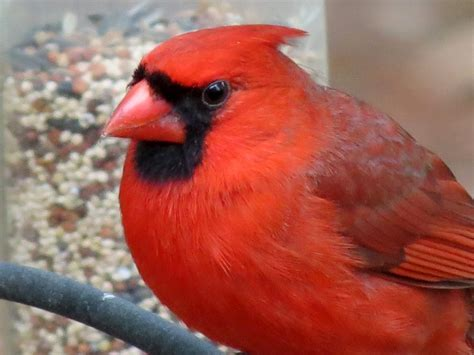 BirdsEyeViews: Spring 2012 Backyard Birds