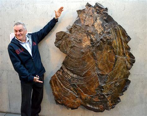 Bivalve gigante   I Fossili!   Paleofox.com, Forum del ...