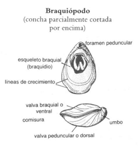 bivalvos   %BLOG_TITLE%