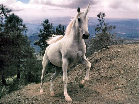 Bizarre Fossils Suggest That Unicorns Were Real And ...
