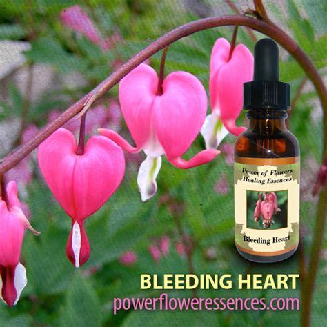 Bleeding Heart Flower Quotes. QuotesGram