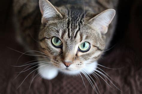 Blog archivos   Gatos y humanos