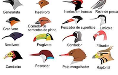 Blog Caiçara ::.. Turismo Consciente : Tipos de Bicos de ...
