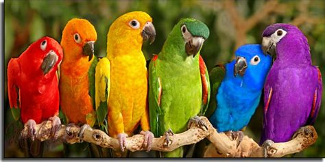 Blog de Animales: CARACTERISTICAS DE LAS AVES EN EL MUNDO