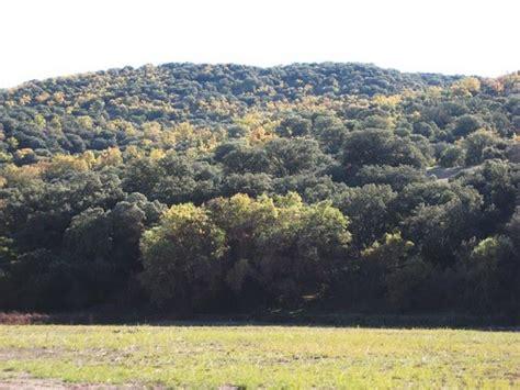blog de Aroa: arboles caracteristicos del bosque mediterraneo