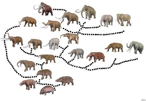 Blog de la Vida Prehistórica: Evolución biológica