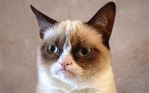 BLOG DEL MALDAD: Memes del Grumpy Cat  gato enojado