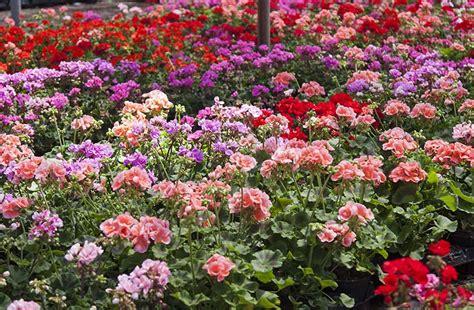 Blog   Plantas resistentes al calor