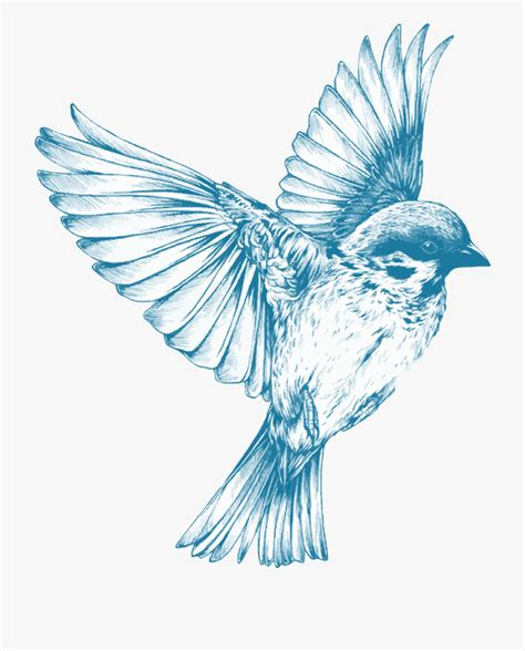 Blue Flying Drawing At Getdrawings Com Free   Blue Bird ...