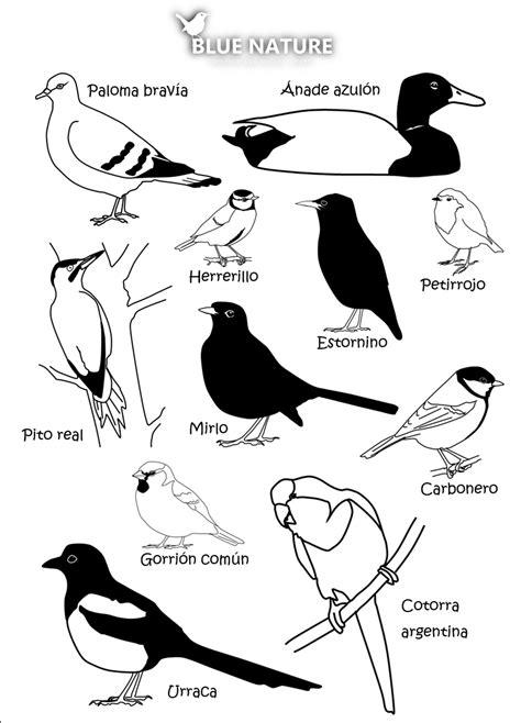Blue Nature, el blog: Aves comunes de parques y jardines ...