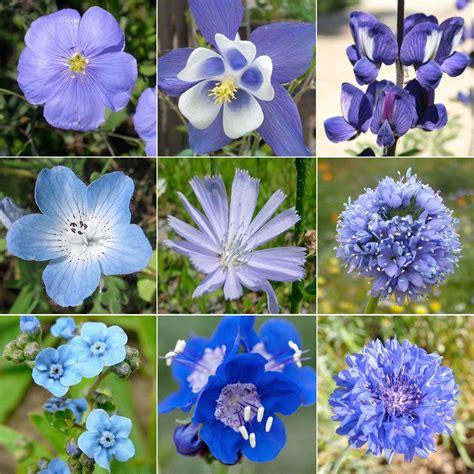Blue Wildflower Names | Wildflower Mixture, Dazzling Blue ...
