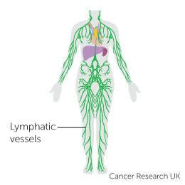 Body systems and cancer | Cancer Research UK