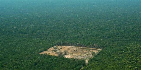 Bolsonaro quiere entregar la Amazonia | Internacional | EL ...