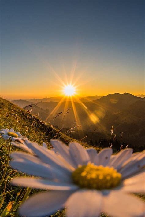 Bonito amanecer | Pretty sunrise   #flores #flowers ...