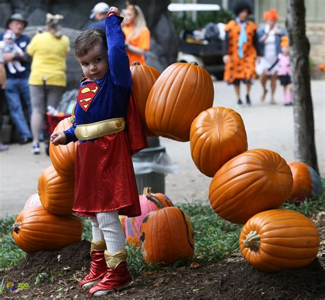 Boo! At The Zoo Begins Oct. 9, 2020   City of Knoxville
