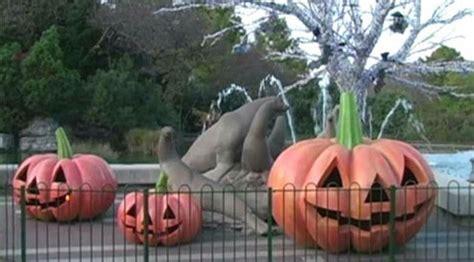 Boo at the Zoo Nights :: Saint Louis Zoo
