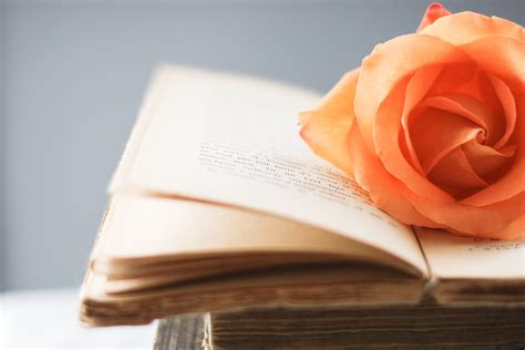 Book HD Wallpaper | Background Image | 3822x2548 | ID ...