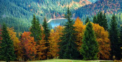 Bosque de Coníferas: Concepto, Flora, Fauna, Clima y ...