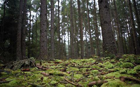 Bosque   Información y Características