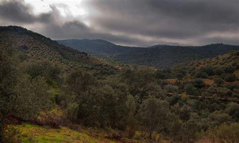 BOSQUE MEDITERRÁNEO  2011 año internacional de los bosques ...