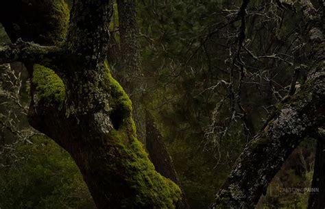 Bosque Mediterráneo | Antonio Painn