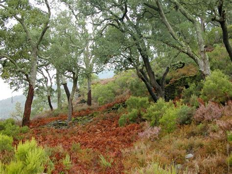 BOSQUE MEDITERRANEO | Bosque mediterraneo, Bosque, Ecosistemas
