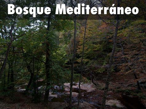Bosque Mediterráneo by esthergonirodriguez