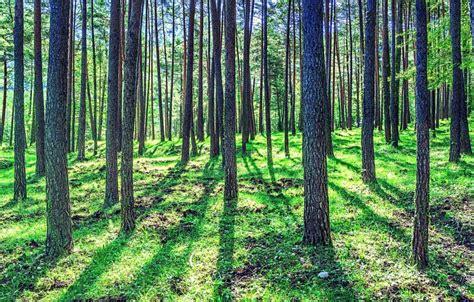Bosque Mediterráneo: [Características, Fauna, Flora y ...
