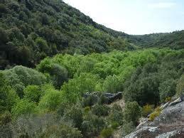 Bosque mediterráneo   cmcbiodiversidadecarmenaida