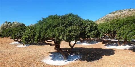 Bosque Mediterráneo   Concepto, flora, fauna, relieve y clima