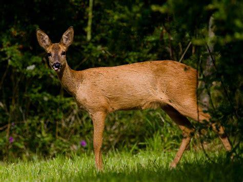 bosque mediterraneo: Fauna