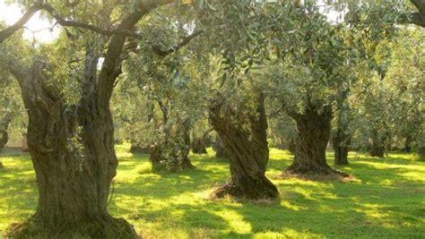 Bosque mediterráneo fauna y vegetación   Árboles, Árboles ...