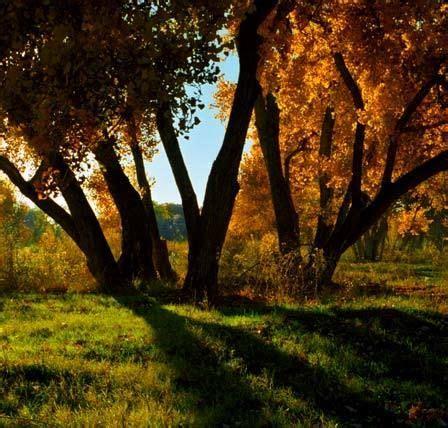 Bosque mediterráneo fauna y vegetación  con imágenes ...