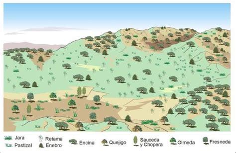 Bosque mediterráneo fauna y vegetación