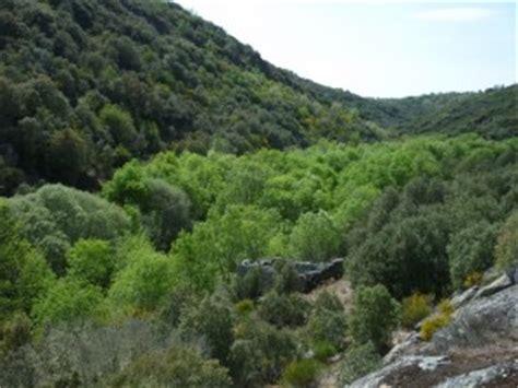 Bosque mediterráneo | La guía de Geografía